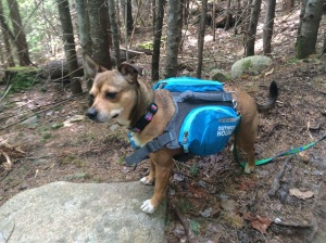 Bailey B  Trail Name BB for Baxter Babe