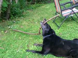 Callie LOVED her sticks 2013