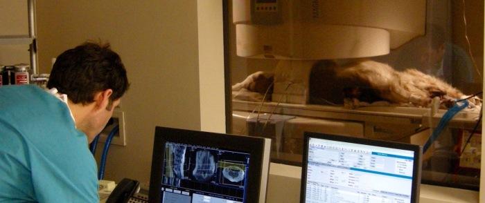 S_9-20 MRI, 4-11-16 .jpg