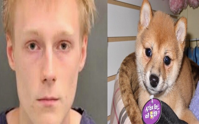 Luke Stribling Beat His Shiba Inu Puppy To Death.