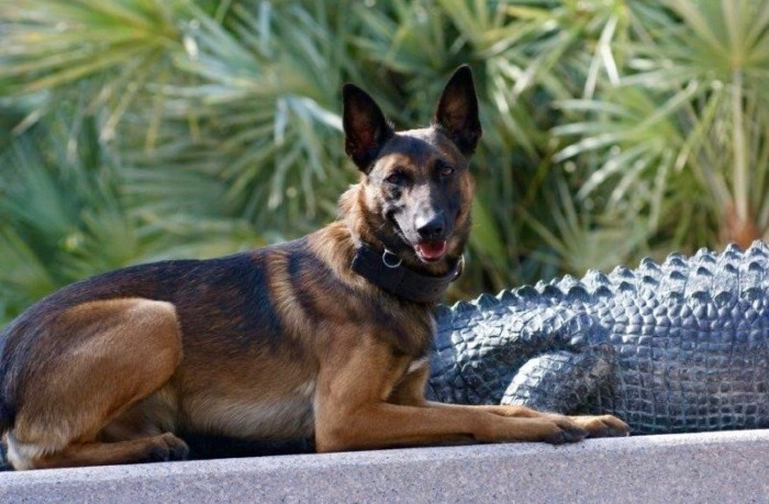 K9 Deaths; A Minor Accomplishment …