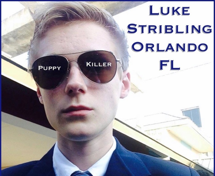 Update on Luke Stribling, Puppy Killer…
