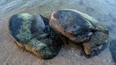 nesting-boulders