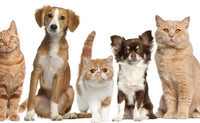 Maine: Passed A Law That Could Harm Animals And Their Veterinarians…Part 1