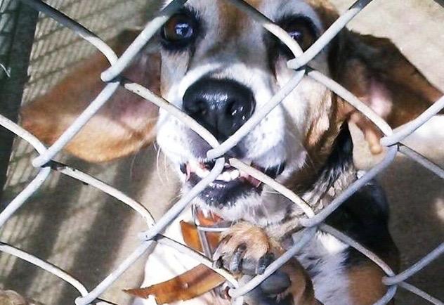 K-9 Freckles ~ A Senior Beagle's UnnecessaryDeath…